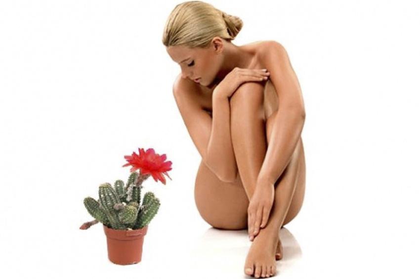 Кактус - олицетворение боли при депиляции и женщина